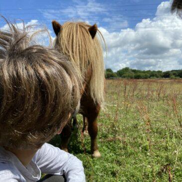 La Sophrologie avec les enfants et l'animal